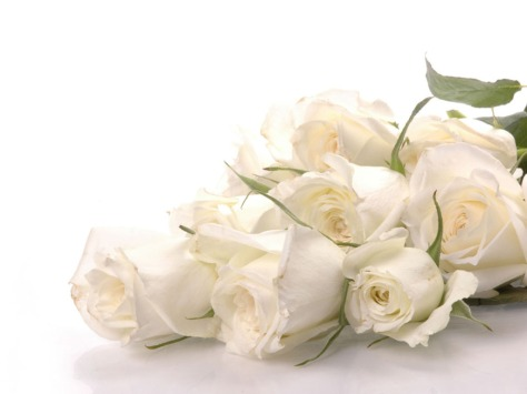 Pure-White-Roses-roses-34611006-1024-768